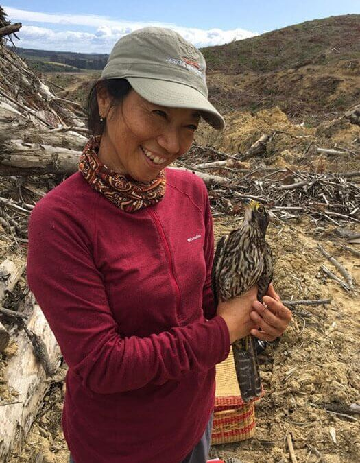 NZ Falcon Breeding Research Update