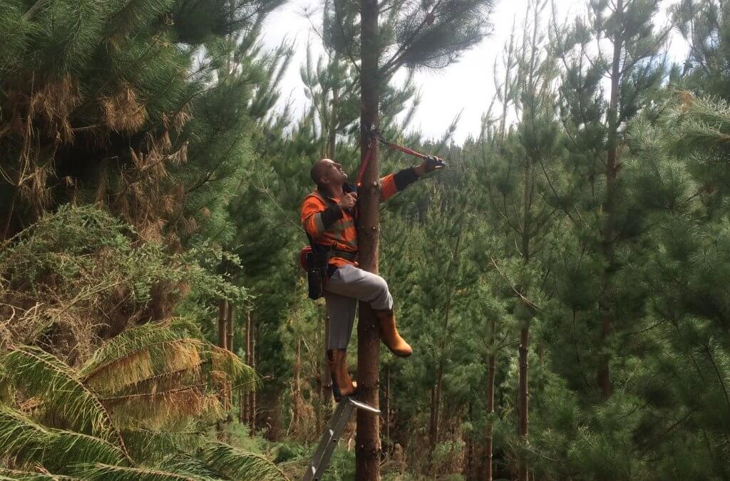 Increased silviculture programme