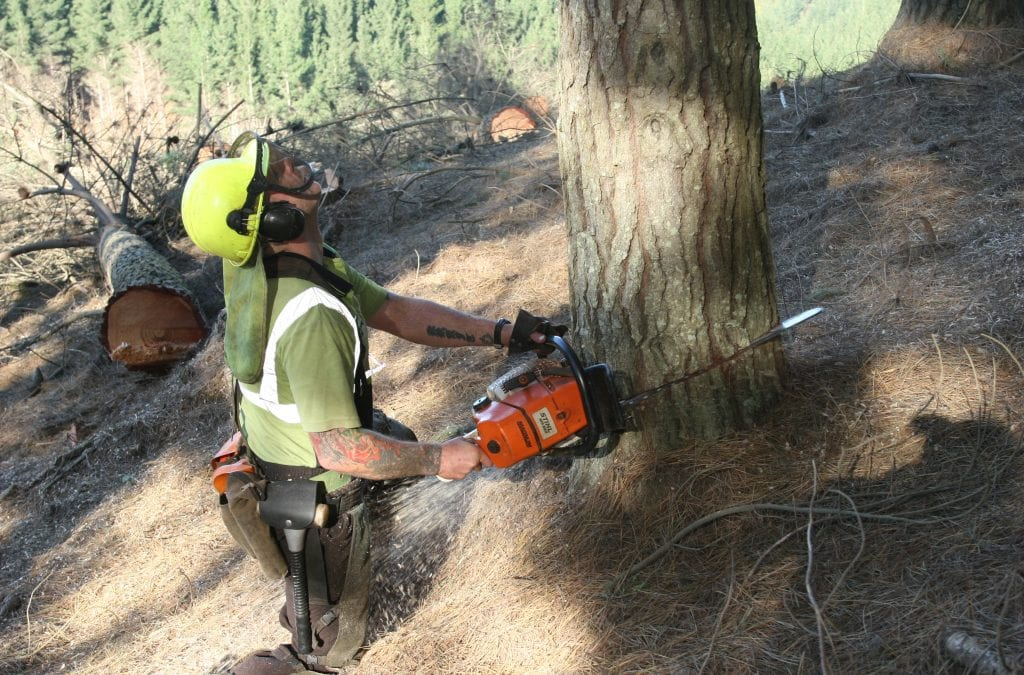 Professional tree-felling certification