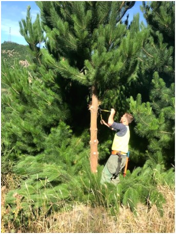 Why do we prune?